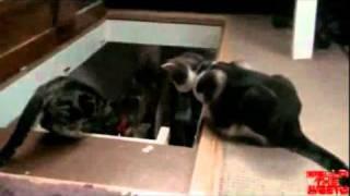 Arkadaşını Merdivenden Atan Hain Kedi   Video   Teleizle