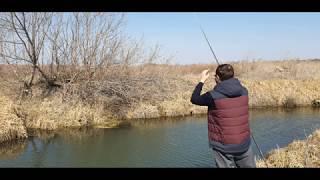 Рыбалка на карпа Клюнул монстр Щука и карп на крючке