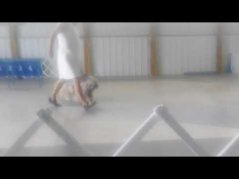 6.21.18 Anoka Cty KC Skye Terriers