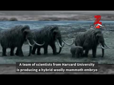 'Extinct' woolly mammoth may be back to Earth in two years – Know how