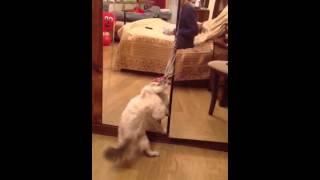 Кошка и зеркало