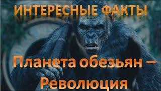 Планета обезьян революция Интересные факты о фильме