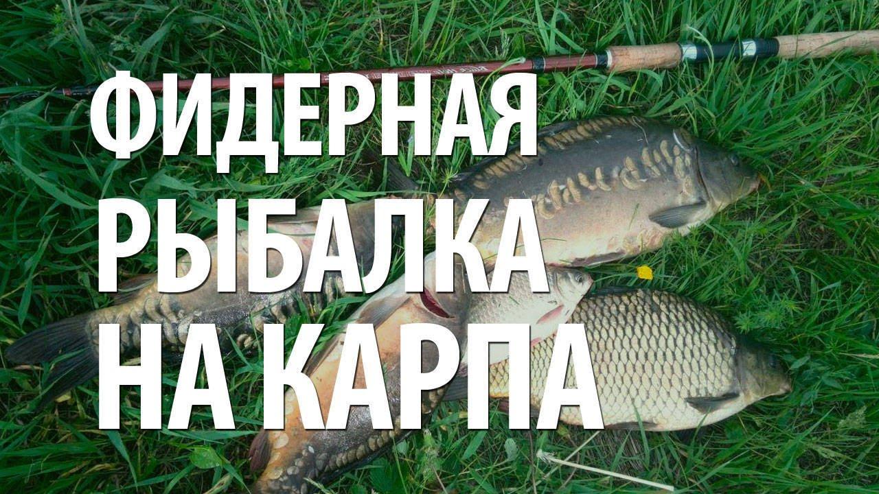 прикормка для днепровского карася