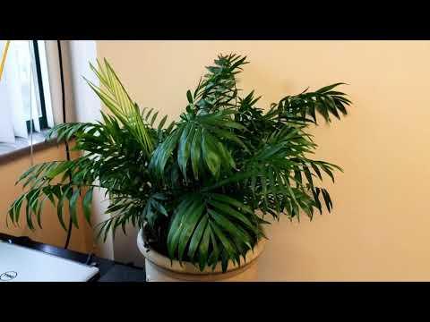 Офисные растения.