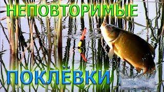видео Весенняя рыбалка на линя