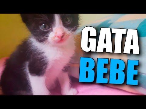 NUEVA GATA DE 1 MES! | Vlog