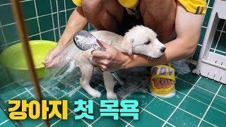 처음으로 아기 강아지를 목욕시켜 보았습니다.