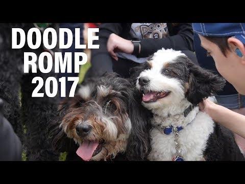 The Doodle Romp 2017!