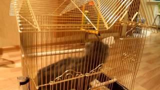 Котенок и попугай..avi
