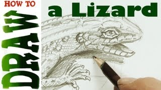 How to Draw a Lizard, White