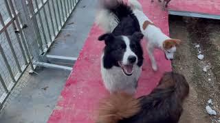 202155 Stray dogs rescue in Wuhan China 跟70只狗在深山老林里面生活再苦再累都是幸福的。
