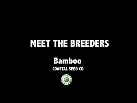 Coastal Seed Co with Bamboo