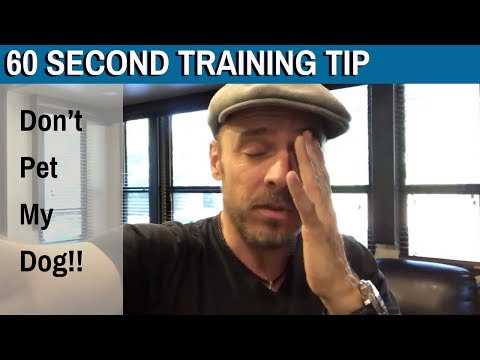 60 Second Training Tip: Don't pet my dog...