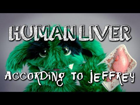 HUMAN LIVER According to Jeffrey | chasethegreenTV