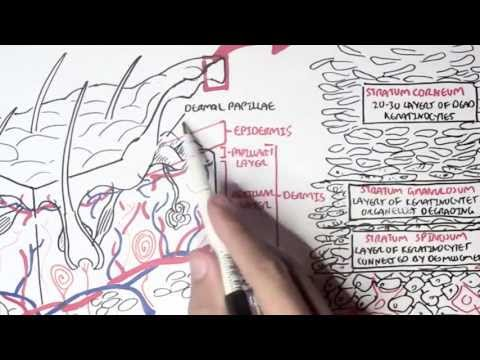 Dermatology - Overview