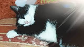 #Weltkatzentag World Cat Day #????????????????????????????