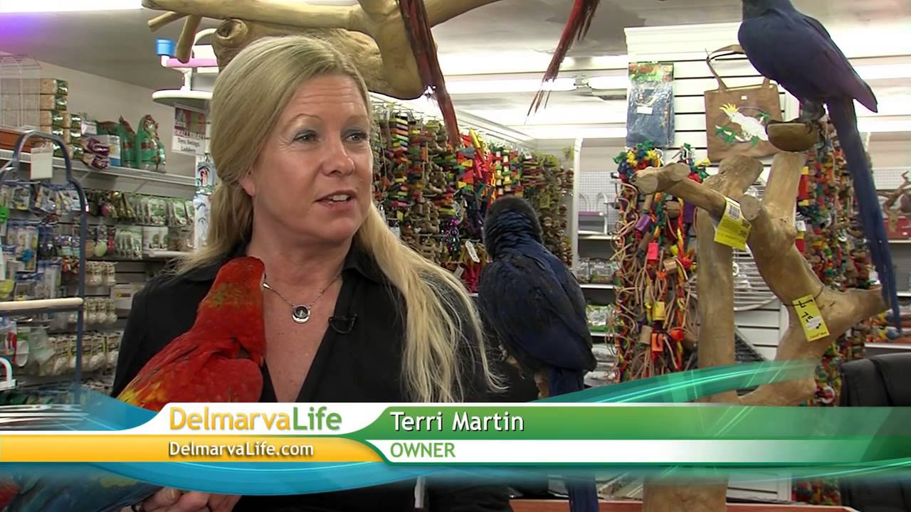 Our Store and the basics of owning a bird