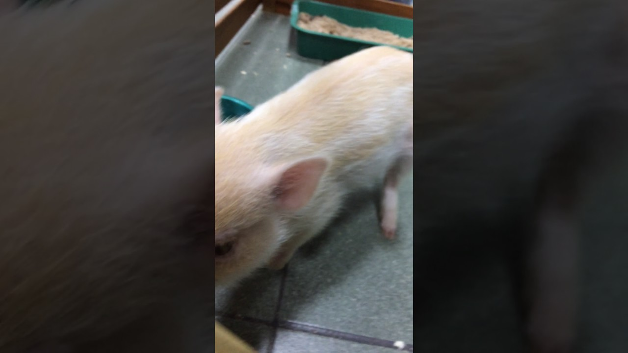 Бабский пердеж видео фото 725-621