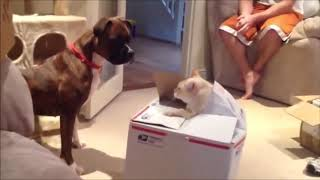 Funny cats vs dogs