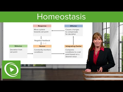 Homeostasis – Cell Biology | Medical Education Videos