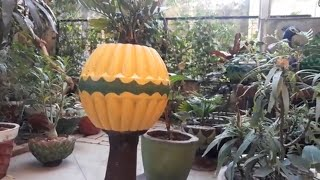 How to make designer cement pot at home.