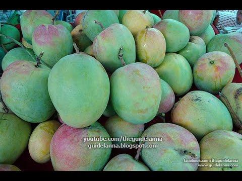เพิ่งเคยเห็น มะม่วงอาร์ทูอีทู ที่งานมะม่วงและของดีเมืองเชียงใหม่ R2E2 Mango