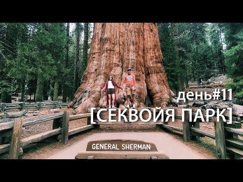 Секвойи. Sequoia National Park, General Sherman Tree. USA ROAD TRIP день#11. #супермарковы