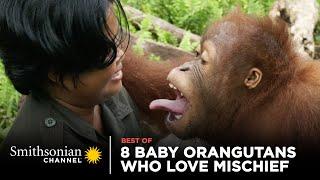 8 Baby Orangutans Who Love Mischief   Smithsonian Channel