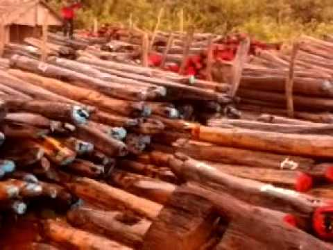 Le trafic du bois de rose bat son plein madagascar youtube for Chambre bois de rose