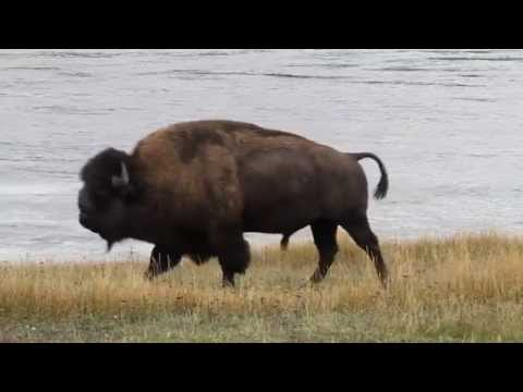 Yellowstone National Park 2014