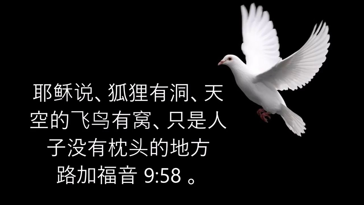 Image result for 狐狸有洞,天空的飞鸟有窝,只是人子没有枕头的地方(路9:58)