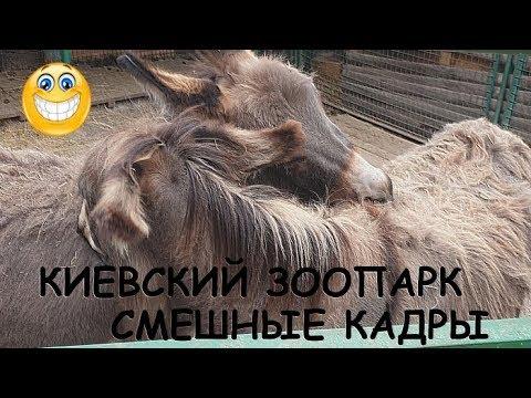 Киевский зопарк 2019, смешные кадры с животными!