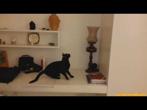 FUNNY VIDEOS  Funny Cats   Funny Cat Videos   Funny Animals   Cats Funny Jump Compilation   YouTu
