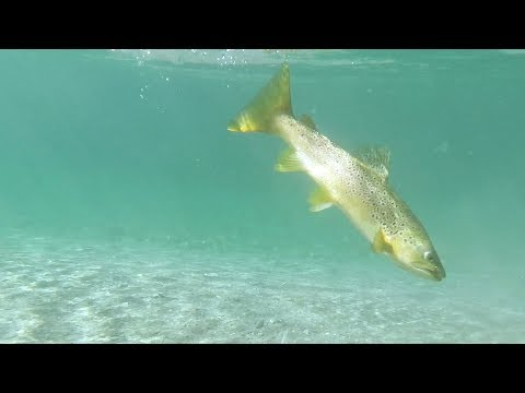 2018 Vlog # 3  -  'Lessons and Learning' - Fly Fishing for Kingfish and Brown Trout