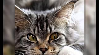 Сухой корм для кошек оптом