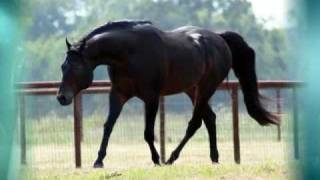 Repeat youtube video Rocked And Steady - AQHA Stallion
