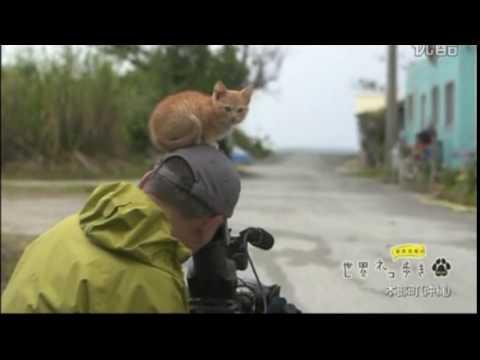 【悶絶注意】可愛すぎる子猫がにゃー!in Okinawa:Cute cat meows in Okinawa