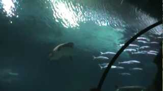 Tour of Shark Reef Aquarium at Mandalay Bay Resort Casino, Las Vegas Strip