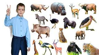 Звуки и голоса животных африки для детей   Рома собирает картинки из кусочков