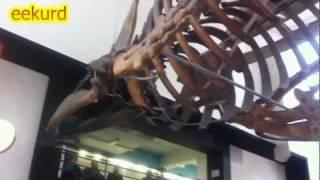 Natural History Museum U.K