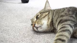 カラスに無関心だった猫が突如突進した!