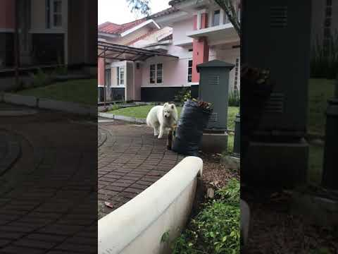 Aslan walk around Kota Baru Parahyangan Padalarang Indonesia