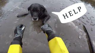 Спасли собаку на льду. Котята примерзли ко льду. Кот прилип к дороге. Спасение животных на льду
