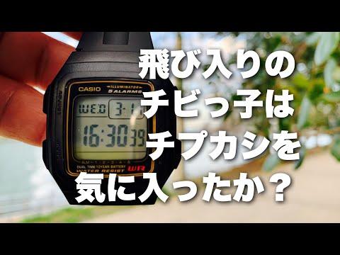 チープカシオCASIO F-201WA-9AJF ちびっ子と共に語る!チプカシちゃんねる 語り/チプカシスト・ヒデオ