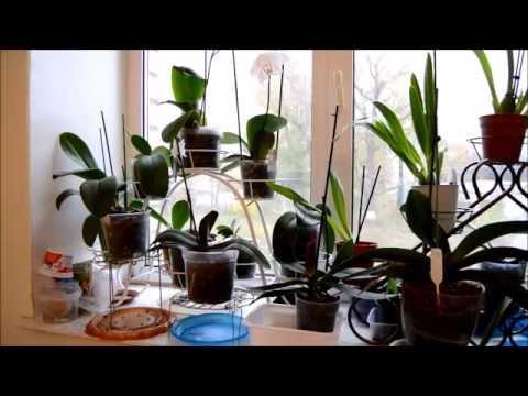 Календарь ухода за орхидеями -Осень! Мои орхидеи!