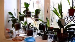 Календарь ухода за орхидеями -Осень! Мои орхидеи!(Совсем недавно на моем канале вышло новое видео-- там я показываю как я делила большой куст орхидеи. А..., 2016-10-07T11:30:38.000Z)