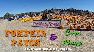 Solvang Farmer's Pumpkin Patch And Corn Maze