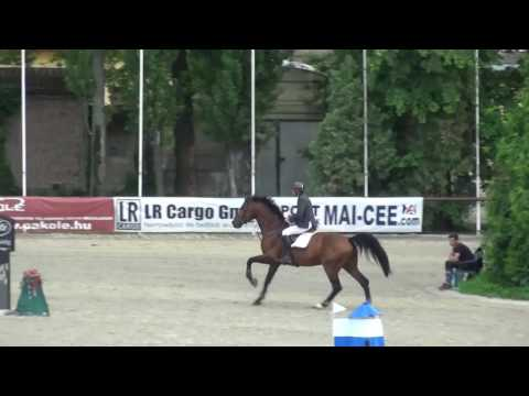 990 Rea *2009 stallion by Quifilio (Quick Star) - Nota Bene (Rossini Z) - Pilot