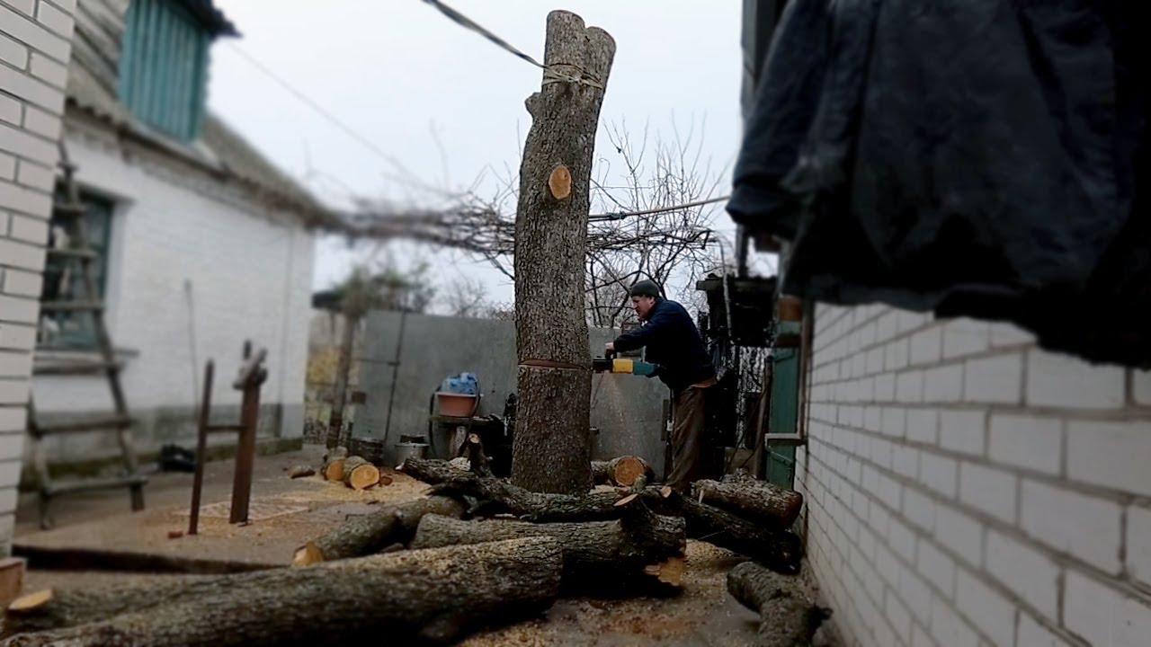 Как безопасно спилить дерево Огромное дерево в плотной застройке. Дрова для мангала, электро пила.