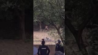 1月29日中国寧波動物園で、男性客(50代)がトラに噛み殺されました。